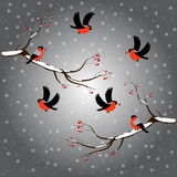 Bullfinch on rowan branch, snow, merry christmas, gray background. Winter vector illustration. Royalty Free Stock Photo