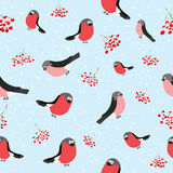Bullfinch seamless Stock Images