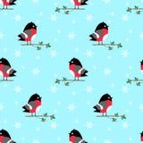 Bullfinch seamless  pattern Royalty Free Stock Photography