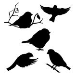Bullfinch set vector. Bullfinch set of silhouettes vector royalty free illustration