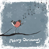 Bullfinch singer. Stock Photo