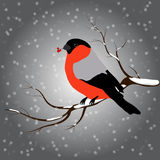 Bullfinch sitting on branch with a twig of Rowan in its beak, snowfall. Winter or christmas vector illustration Royalty Free Stock Photo