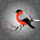 Bullfinch sitting on branch with a twig of Rowan in its beak, snowfall. Winter or christmas vector illustration Stock Photos