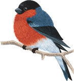Bullfinch. Sitting on a tree branch isolated on white background. Vector illustration Stock Illustration