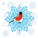 Bullfinch and a snowflake Royalty Free Stock Photos