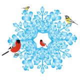 Bullfinch and tits on a snowflake Stock Images