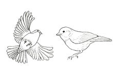 Bullfinch. Two birds Royalty Free Stock Photo