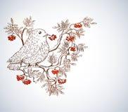 Bullfinch- und Ebereschenhintergrund vektor abbildung
