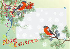 Bullfinch und fir branches Christmas illustration Royalty Free Stock Photography