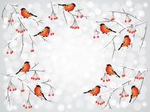 Bullfinch-Vögel auf Niederlassungswinterhintergrund lizenzfreie abbildung