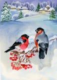 Bullfinch-Vögel auf schneebedecktem Baumast Dekoratives Bild einer Flugwesenschwalbe ein Blatt Papier in seinem Schnabel lizenzfreie abbildung