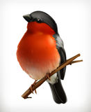 Bullfinch vector icon. Bullfinch on the branch, vector icon, isolated on white background Stock Photo