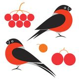 Bullfinch. Vector illustration (EPS 10 vector illustration