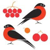 Bullfinch. Vector illustration (EPS 10 Royalty Free Stock Photography