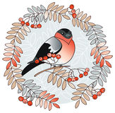 Bullfinch vignette Stock Photography