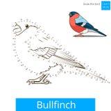 Bullfinch-Vogel lernen, Vektor zu zeichnen vektor abbildung