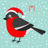 Bullfinch winter red feather bird. Santa hat. Merry Christmas greeting card. Stock Image