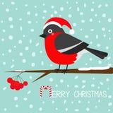 Bullfinch winter red feather bird sitting on rowan rowanberry sorb berry tree branch. Santa hat. Cute cartoon funny character. Bab Stock Image