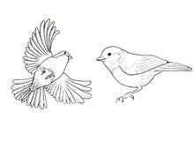 bullfinch Zwei Vögel stock abbildung