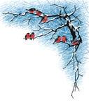 Bullfinches на ветвях Стоковое Изображение