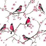 Bullfinches на картине ветви Сакуры безшовной Стоковое Изображение