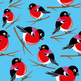 Bullfinches on blue. Stock Photography