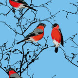 Bullfinches on the branch cyan seamless vector pattern Royalty Free Stock Photos