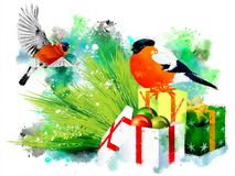Bullfinches on Christmas gifts. stock photos