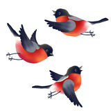 Bullfinches Royalty Free Stock Photos