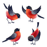 Bullfinches Royalty Free Stock Images