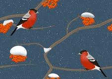 Bullfinches en árbol en invierno Imagen de archivo libre de regalías