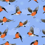 Bullfinches in flight. Pattern seamless Royalty Free Stock Image