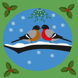 Bullfinches and mistletoe Stock Photos