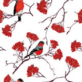Bullfinches on mountain ash branches vector seamless pattern Royalty Free Stock Photos