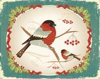 Bullfinches no inverno. ilustração do vetor