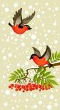 Bullfinches rojos en fondo del invierno Imagen de archivo libre de regalías
