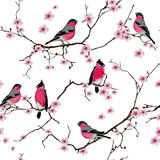 Bullfinches on the sakura branch seamless vector pattern Stock Image