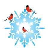 Bullfinches on a snowflake Royalty Free Stock Photography