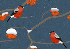 Bullfinches on tree in winter Royalty Free Stock Image