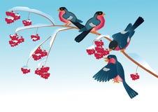 Bullfinchs op de tak van wilde as Stock Illustratie
