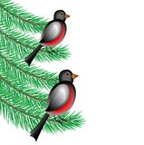 Bullfinchs sit on the branches of fir-tree. Vector  illustration Royalty Free Stock Image