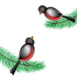 Bullfinchs sit on the branches of fir-tree. Vector  illustration Stock Photos