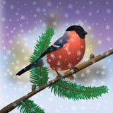 Bullflinch 红色鸟 免版税库存照片