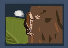 The bullfrog cattoon. Climb on the tree at midnight Stock Images
