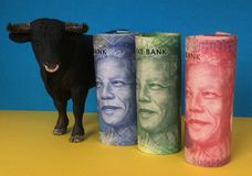 Bullish market sentiment on rand. Bull with South African rand banknotes Stock Image