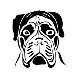 bullmastiff品种的狗的画象 免版税库存照片