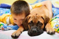 Bullmastiff щенка с мальчиком Стоковое Изображение RF