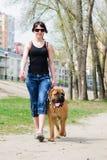 Bullmastiff del cane e della donna Fotografie Stock Libere da Diritti