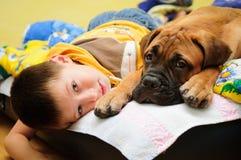 Bullmastiff del perrito con el muchacho imagen de archivo libre de regalías