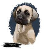 Bullmastiff-Welpenzuchthund-portarait digitale Kunstillustration lizenzfreie abbildung